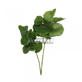 GS-1380175 Green Single Lotus Geranium